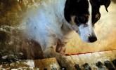 Letzte Vorstellung: Heart of a Dog